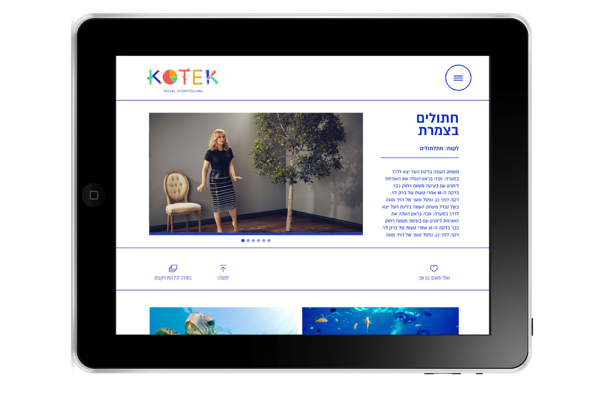 kotek website